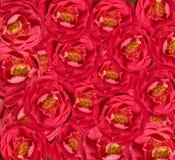 όμορφος floral κόκκινος ανασ&kappa Στοκ εικόνα με δικαίωμα ελεύθερης χρήσης