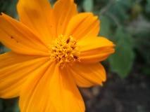 Όμορφος floral τρομερός λουλουδιών από τη φύση στοκ εικόνα