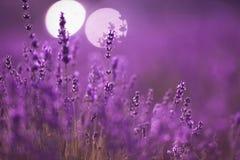 Όμορφος lavender τομέας στο ηλιοβασίλεμα Στοκ εικόνες με δικαίωμα ελεύθερης χρήσης
