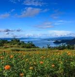 Όμορφος marigold κήπος μπροστά από το μπλε φράγμα Srinakarin με το σαφή μπλε ουρανό, επαρχία Kanchanaburi, Ταϊλάνδη, Νοτιοανατολι Στοκ φωτογραφίες με δικαίωμα ελεύθερης χρήσης