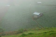 Όμορφος misty πέρα από το αγρόκτημα λάχανων στο βουνό Στοκ φωτογραφία με δικαίωμα ελεύθερης χρήσης