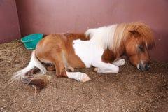 όμορφος ponny Στοκ εικόνες με δικαίωμα ελεύθερης χρήσης