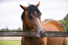 Όμορφο άλογο σε ένα αγρόκτημα στοκ φωτογραφίες με δικαίωμα ελεύθερης χρήσης