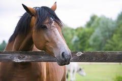 Όμορφο άλογο σε ένα αγρόκτημα στοκ φωτογραφία με δικαίωμα ελεύθερης χρήσης