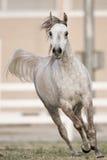 όμορφο άλογο Στοκ εικόνα με δικαίωμα ελεύθερης χρήσης