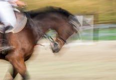 όμορφο άλογο στοκ εικόνες με δικαίωμα ελεύθερης χρήσης