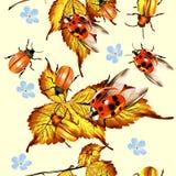 Όμορφο άνευ ραφής σχέδιο με το φύλλωμα και τους κανθάρους Στοκ Εικόνες