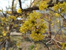 Όμορφο άνθισμα άνοιξη των οπωρωφόρων δέντρων Στοκ εικόνα με δικαίωμα ελεύθερης χρήσης