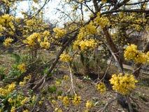 Όμορφο άνθισμα άνοιξη των οπωρωφόρων δέντρων Στοκ Εικόνες