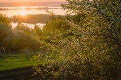 Όμορφο άνθος κερασιών στον κήπο στην ανατολή Στοκ Εικόνα
