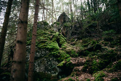 Όμορφο δάσος άνοιξη στη turistic διαδρομή του ίχνους Dovbush Carpathians στοκ φωτογραφία με δικαίωμα ελεύθερης χρήσης