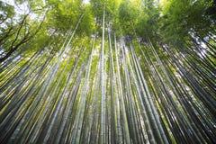 Όμορφο δάσος μπαμπού Arashiyama στο Κιότο, Ιαπωνία Στοκ φωτογραφία με δικαίωμα ελεύθερης χρήσης