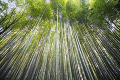Όμορφο δάσος μπαμπού Arashiyama στο Κιότο, Ιαπωνία Στοκ Φωτογραφία