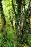 Όμορφο δάσος το φθινόπωρο στο εθνικό πάρκο Plitvice Στοκ Εικόνα