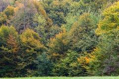 Όμορφο δάσος το φθινόπωρο στο εθνικό πάρκο Plitvice Στοκ φωτογραφίες με δικαίωμα ελεύθερης χρήσης