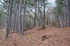 Όμορφο δάσος φθινοπώρου νεράιδων στα βουνά Στοκ Φωτογραφίες