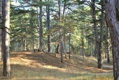 όμορφο δάσος φθινοπώρου Στοκ Φωτογραφίες