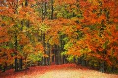 όμορφο δάσος φθινοπώρου Στοκ εικόνα με δικαίωμα ελεύθερης χρήσης