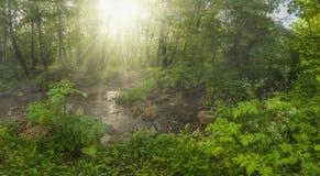 όμορφο δάσος στοκ φωτογραφίες