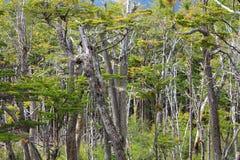 όμορφο δάσος Στοκ εικόνες με δικαίωμα ελεύθερης χρήσης