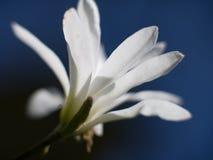 Όμορφο άσπρο λουλούδι στο μπλε ουρανό στοκ φωτογραφίες με δικαίωμα ελεύθερης χρήσης