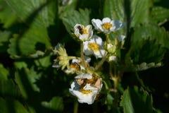 Όμορφο άσπρο λουλούδι Στοκ εικόνα με δικαίωμα ελεύθερης χρήσης