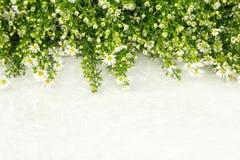 Όμορφο άσπρο λουλούδι πάνω από το έγγραφο mulbery ως πλαίσιο Στοκ εικόνες με δικαίωμα ελεύθερης χρήσης