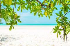 Όμορφο άσπρο παραλία άμμου και θαλάσσιο νερό και δέντρο aqua Στοκ Εικόνα