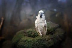 Όμορφο άσπρο ara παπαγάλων Στοκ Φωτογραφίες