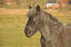 Όμορφο άλογο σε έναν τομέα Στοκ Φωτογραφίες