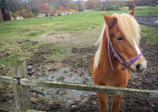 Όμορφο άλογο στη βόρεια Γερμανία Στοκ εικόνα με δικαίωμα ελεύθερης χρήσης