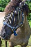 Όμορφο άλογο στο λιβάδι Στοκ φωτογραφία με δικαίωμα ελεύθερης χρήσης