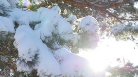 Όμορφο δέντρο έλατου που καλύπτεται με το χιόνι, στενή επάνω άποψη Στοκ Φωτογραφία