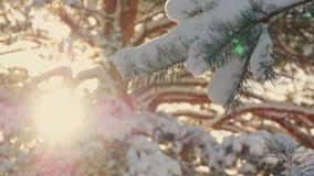 Όμορφο δέντρο έλατου που καλύπτεται με το χιόνι, στενή επάνω άποψη Στοκ Φωτογραφίες