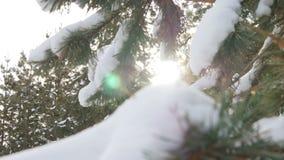 Όμορφο δέντρο έλατου που καλύπτεται με το χιόνι, στενή επάνω άποψη Στοκ εικόνα με δικαίωμα ελεύθερης χρήσης