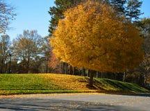 Όμορφο δέντρο πτώσης Στοκ Εικόνα