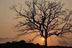 Όμορφο δέντρο στο ηλιοβασίλεμα Στοκ φωτογραφίες με δικαίωμα ελεύθερης χρήσης