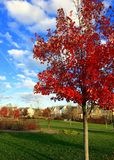 Όμορφο δέντρο στο πάρκο Mattie Stepanek το Νοέμβριο Στοκ Εικόνες