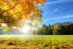 Όμορφο δέντρο φθινοπώρου με τα πεσμένα ξηρά φύλλα Στοκ εικόνα με δικαίωμα ελεύθερης χρήσης