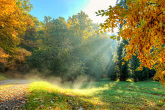 Όμορφο δέντρο φθινοπώρου με τα πεσμένα ξηρά φύλλα Στοκ φωτογραφία με δικαίωμα ελεύθερης χρήσης