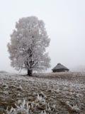 όμορφο δέντρο Στοκ εικόνες με δικαίωμα ελεύθερης χρήσης