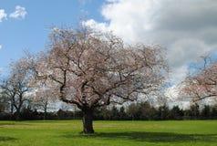 όμορφο δέντρο Στοκ Εικόνα