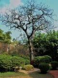 όμορφο δέντρο Στοκ Εικόνες