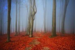 Όμορφο ίχνος στο misty δάσος Στοκ Εικόνα