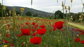 Όμορφο αγρόκτημα στην Τουρκία Στοκ εικόνα με δικαίωμα ελεύθερης χρήσης