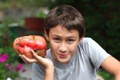 Όμορφο αγόρι 10 yesars παλαιά, κρατώντας τις πολύ μεγάλες ντομάτες μεγέθους Στοκ εικόνα με δικαίωμα ελεύθερης χρήσης