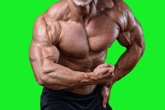 Όμορφο αθλητικό άτομο δύναμης στη διατροφή που εκπαιδεύει αντλώντας επάνω τους μυς Στοκ εικόνες με δικαίωμα ελεύθερης χρήσης