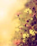 Όμορφο αναδρομικό υπόβαθρο θαμπάδων με τα λουλούδια Στοκ φωτογραφίες με δικαίωμα ελεύθερης χρήσης