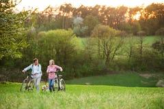 Όμορφο ανώτερο ζεύγος με τα ποδήλατα και τη φύση εξωτερικού σκυλιών την άνοιξη Στοκ Φωτογραφίες