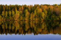 όμορφο απεικονισμένο δάσ&om Στοκ Φωτογραφίες